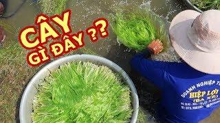 ĐẶC SẢN QUÝ HIẾM ở Miền Tây mùa nước nổi |Du lịch Việt Nam