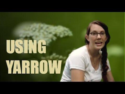 Yarrow Herb: Identifying, Harvesting and using Yarrow Herb.
