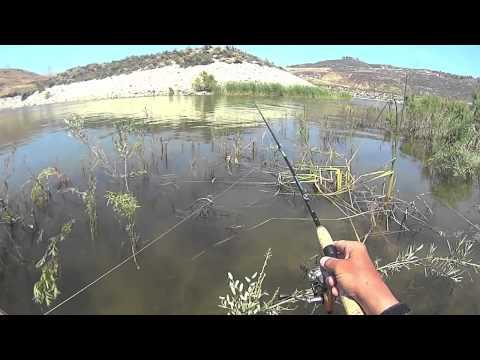 Castaic lake fishing piercing lips sinking ships fishing for Castaic fishing report