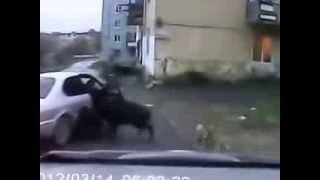 Кабан напал на женщину