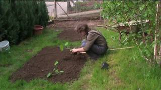 entropy tv garden tips planting beans and courgettes