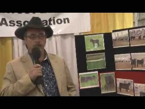 History of low line Angus beef