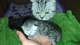 Котятам  5 дней. Что делать,если Кошка отказалась кормить Котят