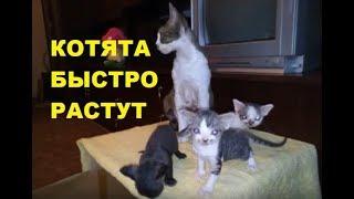 ✅ Как менялись котята в течение 3-х месяцев