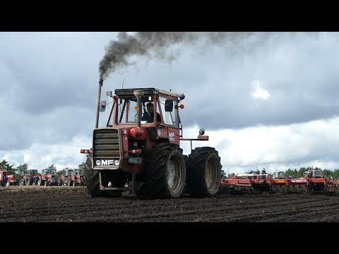 Massey Ferguson 1200 Working Hard in The Field w/ Kongskilde Triple K Cultivator | Danish Agri