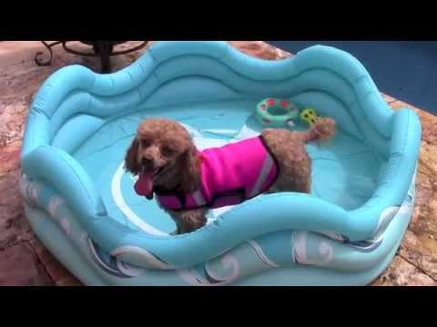 Mariner Inflatable Dog Pool by Alcott