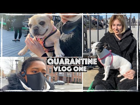 Puppies At The Park - Quarantine Vlog One   BeingDaphne
