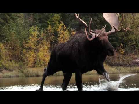 Jim Shockey's Hunting Adventures - Rogue River Outfitters pt. 2 - Outdoor Channel