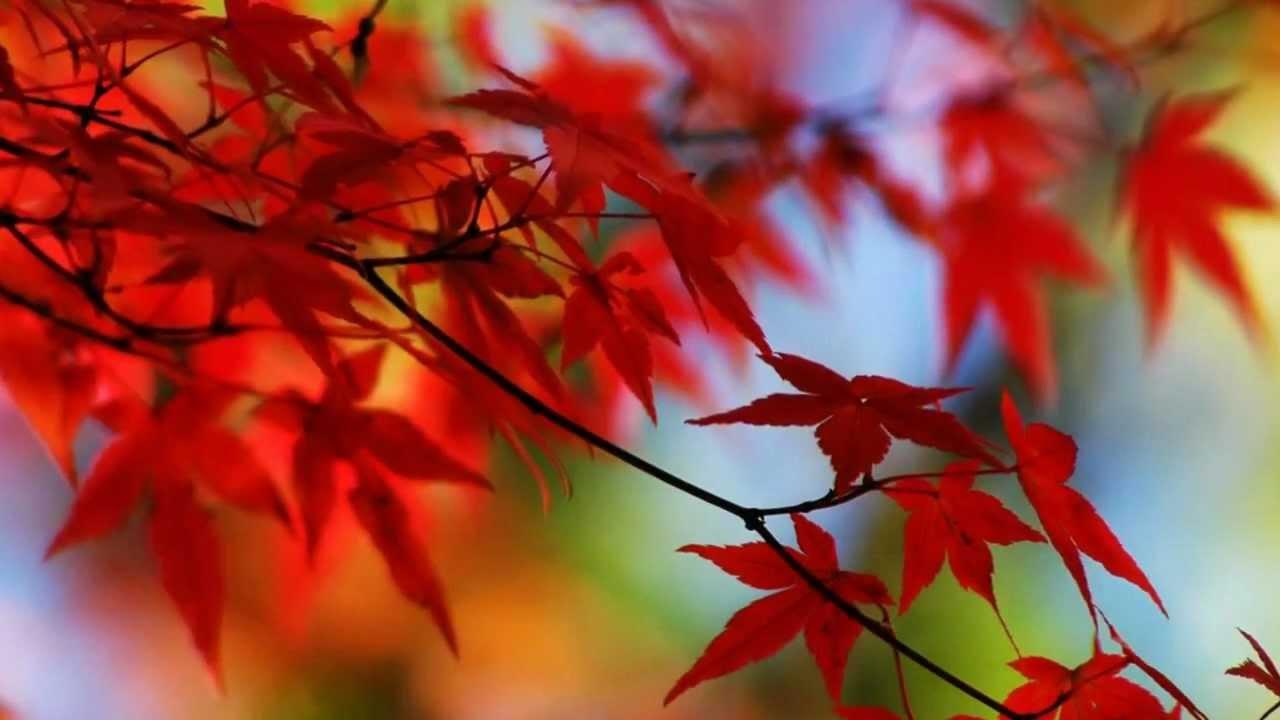 10월의 어느 멋진 날에 (Very Wonderful Day in October)- 가을 풍경 ...