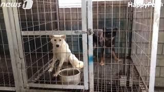 김포 식용 목적 개들의 경매장-dog