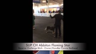 2014-09-20 Rasv Royal Melbourne Dog Show Acd Best Of Breed Judging