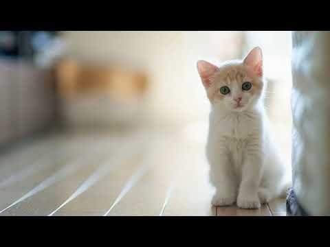 Как избавиться от блох у котенка быстро в домашних условиях народными средствами