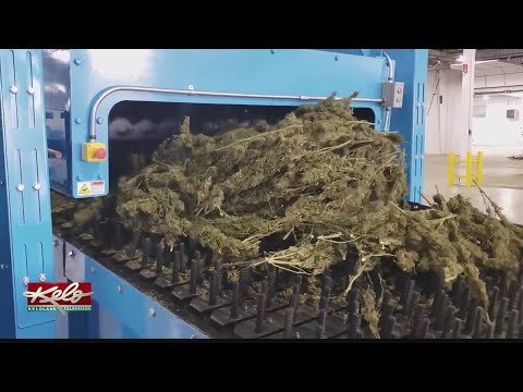 South Dakota Company Invents Equipment For Fast-growing Hemp Industry