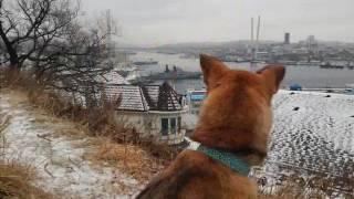 """Фонд Умка: презентация """"Несси - лучшая собака на всем свете"""""""