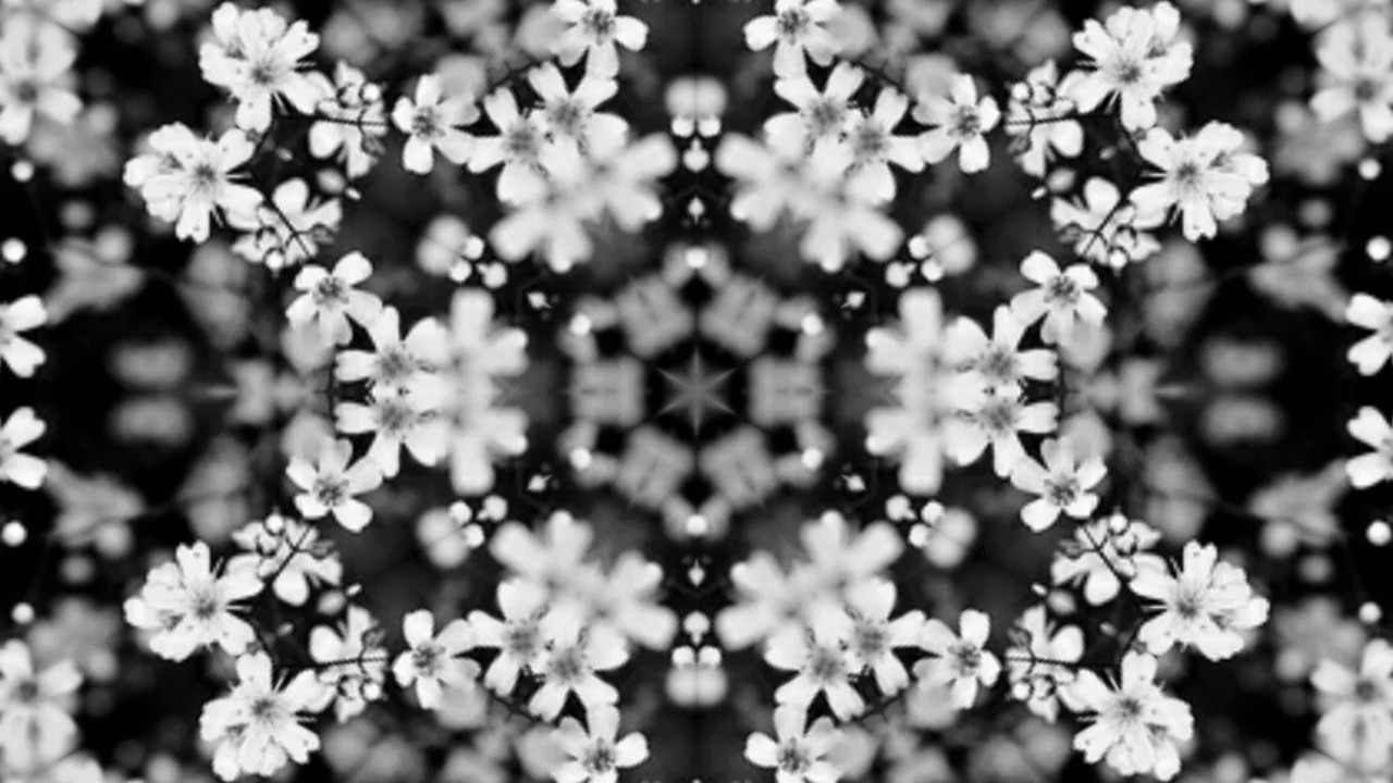 Caleidoscopio De Flores Tumblr Caleidoscopio Blanco Y Negro