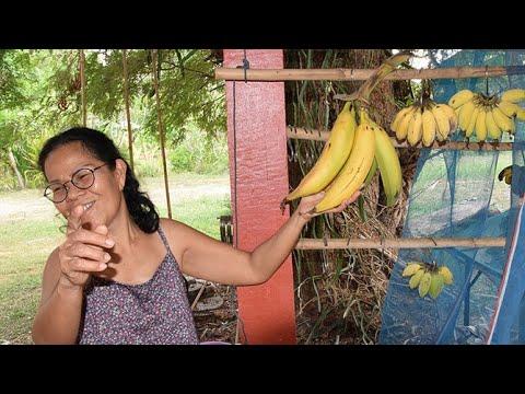 Zu Gast bei einer thai-deutschen Familie im Isan – Farm Homestay in Nordost-Thailand, Khon Kaen