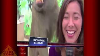 the most awkward moments caught on live tv   live tv fails compilation 2017 part 34