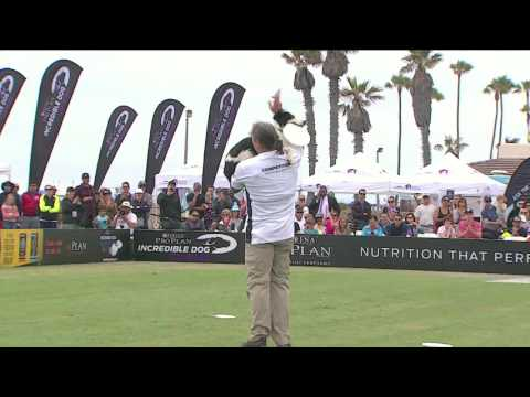 Freestyle Flying Disc Competition-2016 Purina® Pro Plan® Incredible Dog Challenge® Western Regionals