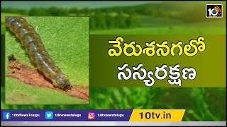 వేరుశనగలో సస్యరక్షణ: Groundnut Cultivation Techniques By Srikakulam Scientist | Matti Manishi