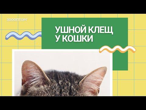 Уши кошек и кто в них живёт