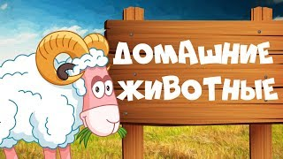 ДОМАШНИЕ ЖИВОТНЫЕ для детей - развивающие мультики учим животных для самых маленьких на русском