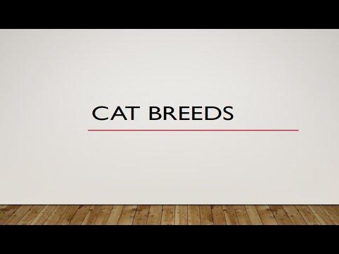 Cat Breeds  HUSBANDRY FINAL