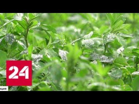 Призывы защитить здоровье не услышали: Евросоюз продлил использование глифосата - Россия 24
