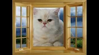 Песня про кошку