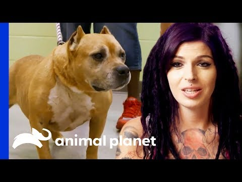 Adopted Dog Brought Back To Villalobos From A Mississippi Shelter!  | Pit Bulls & Parolees