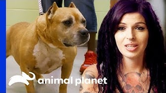 Adopted Dog Brought Back To Villalobos From A Mississippi Shelter!    Pit Bulls & Parolees