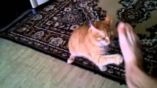 Кот сильно напуган