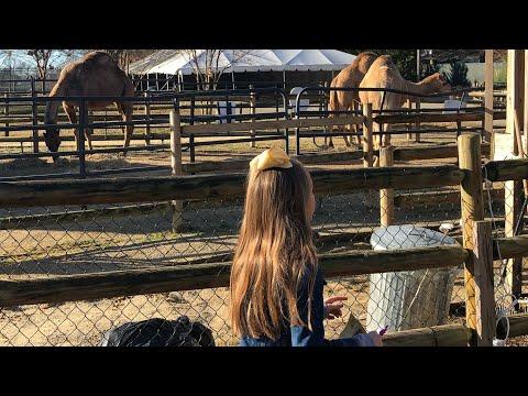 Chattanooga Zoo Trip