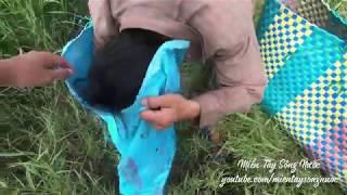 Võ Minh Phụng : Truy Tìm Nơi Hang Ổ Bầy Chuột Cống Nhum Khổng Lồ | Miền Tây Sông Nước