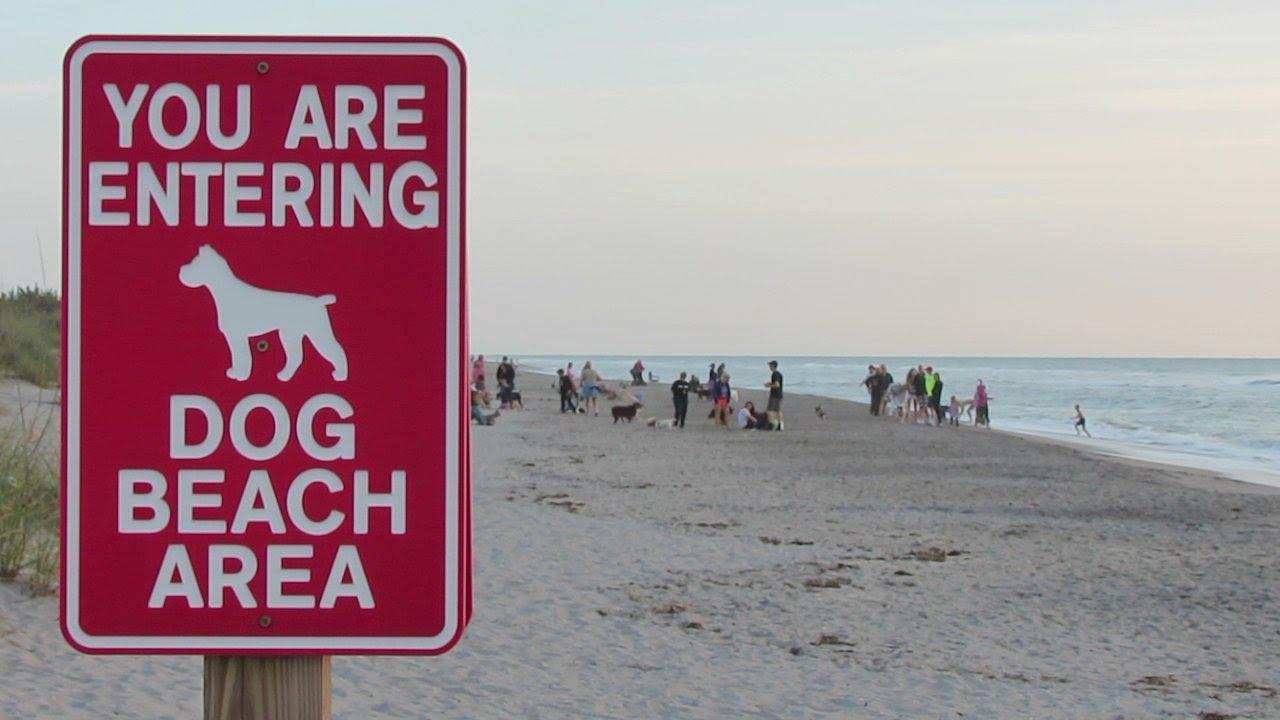 Dog Beach Venice Florida