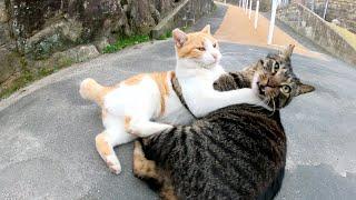 「この人とは僕が遊ぶんだ!」と取っ組み合いの喧嘩をはじめる猫達