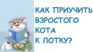 Как приучить ВЗРОСЛОГО кота к лотку.