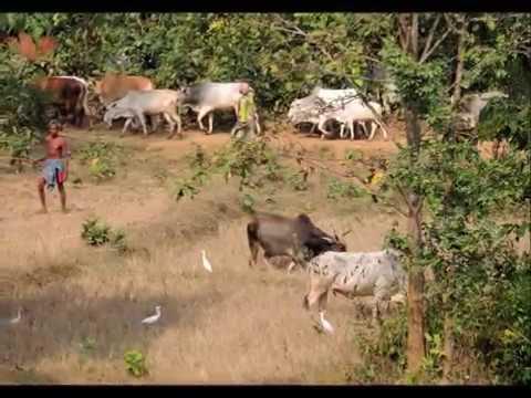 jhargram-shalboni-belpahari trip