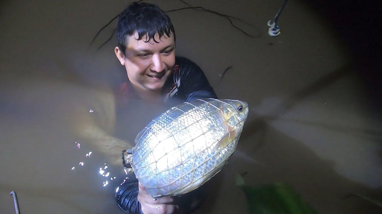 Pescando con tripa de pollo lombriz y tarraya.