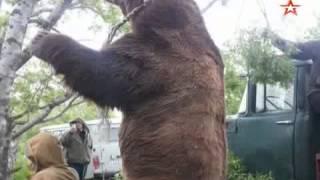 Гигантский медведь-убийца «навестил» жителей камчатского села