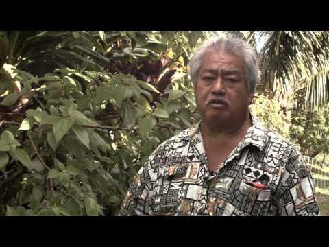 """Kahumoku Farms """"Mamaki Tea"""""""