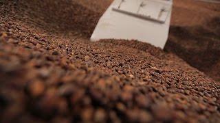 Сделано в Кузбассе HD: Переработка кедрового ореха
