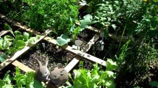 Garden update September 20, 2011