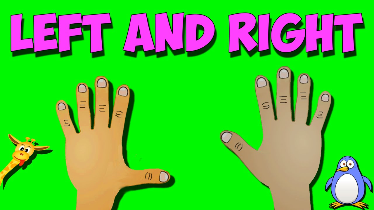 Scientific insights into the annoying everyday problem of left-right confusion.