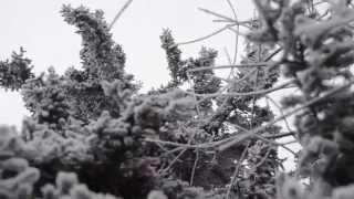 зима ёлка в снегу 2 Free Stock Video для Нового года