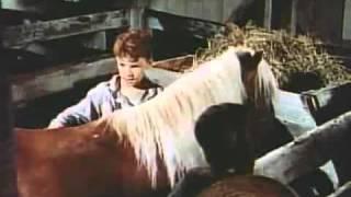 The Red Pony   Original Trailer 1949