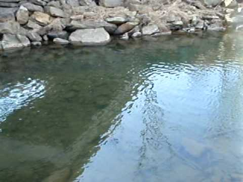 how to catch seeforellen brown trout