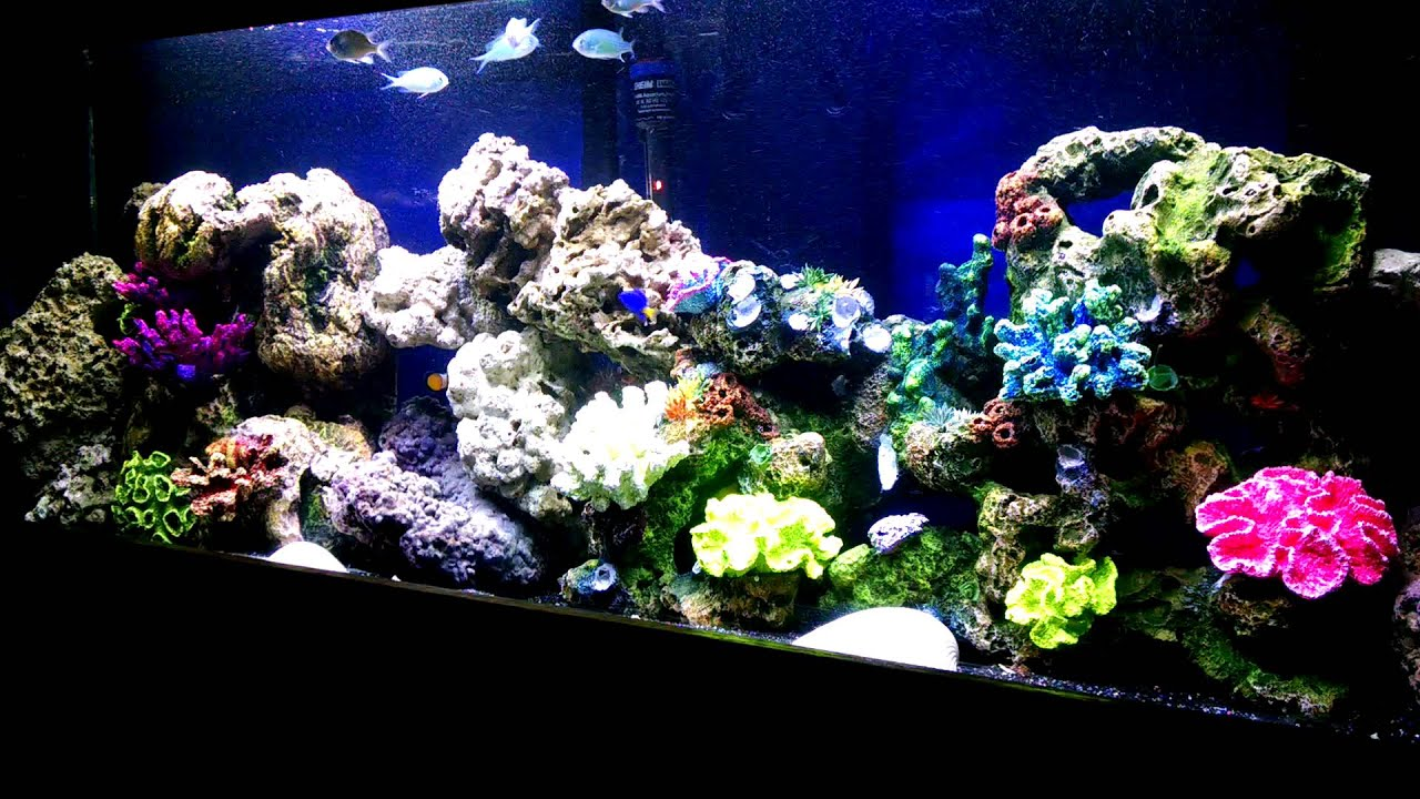 decorating bedroom built sand coral marvellous background aquarium grass plants ideas come with nice decoration big awesome black underneath and sea large decorations cabinets panels fish appealing wooden white for green tank wood decor
