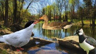 Весна. Дикие птицы возвращаются    Миллион вопросов о природе