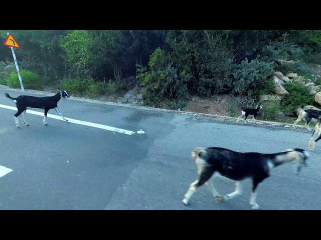 Vietnams mediterrane Wälder | Vinh Hy | Vietnam • Vlog #101