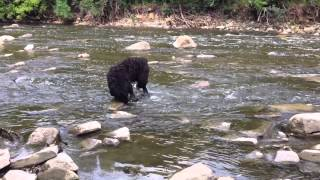Black Russian Terrier Koba Goes Back To The Wild